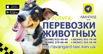 """""""Avant-garde"""". Taxi in Kiev"""