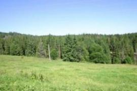 Dlance sold land in the Carpathians