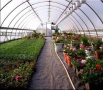 Film coating for greenhouses Vatan Plastik. Greenhouse film